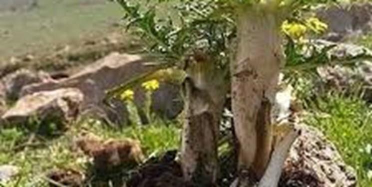 افزایش 350 برابری سرعت انقراض گیاهان
