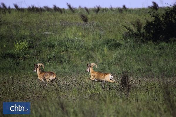 طرح حفاظت از پارک ملی گلستان با تقویت صنایع دستی و گردشگری منطقه