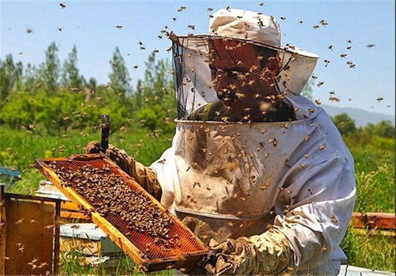 11 تن عسل شهرضا به کشورهای آسیایی صادر شد، لزوم انتخاب برند مناسب برای معرفی عسل شهرضا