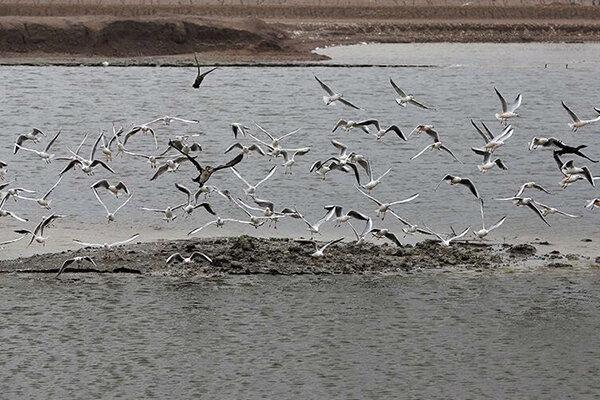 پایش زیستگاه های پرندگان مهاجر در جنوب استان تهران شروع شد