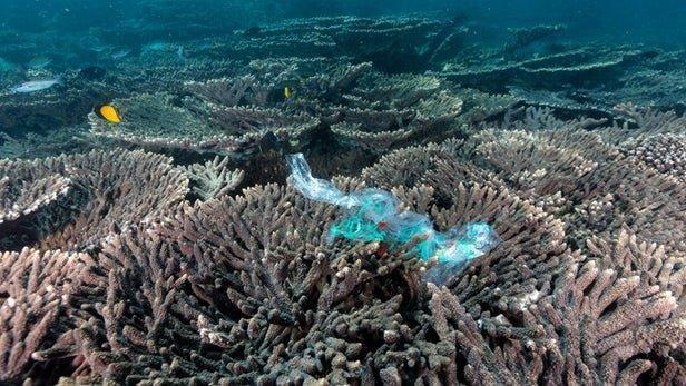 زباله های پلاستیکی جدیدترین تهدید برای صخره های مرجانی